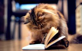 Kitty bookworm